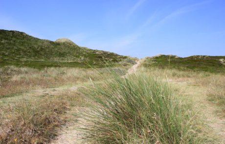 Dünen Nordseeinsel Sylt